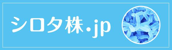 シロタ株JP